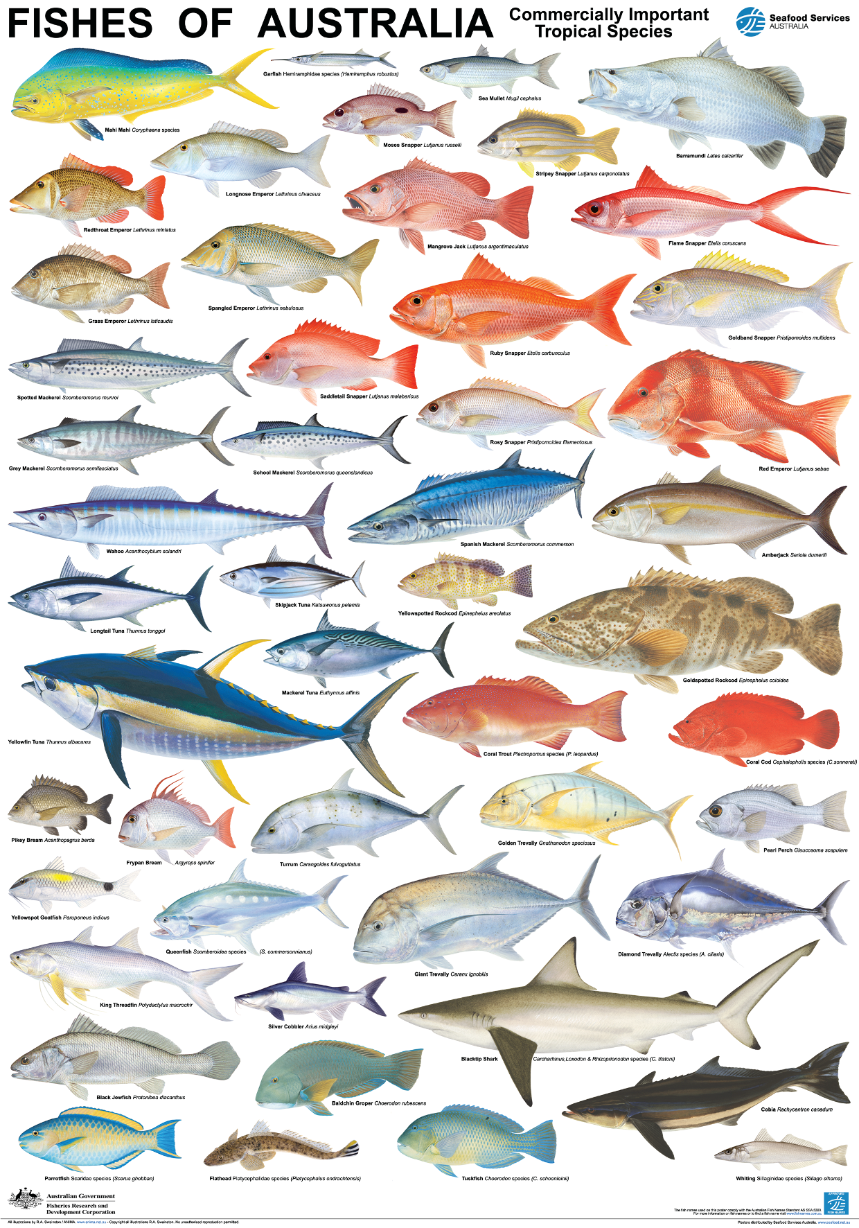 Saltwater fish species images for Are fish mammals
